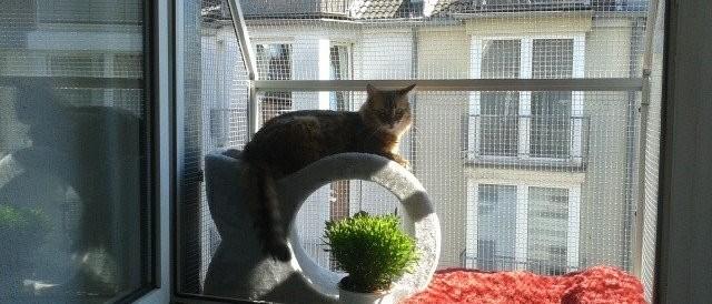Fensterkäfig für Katzen